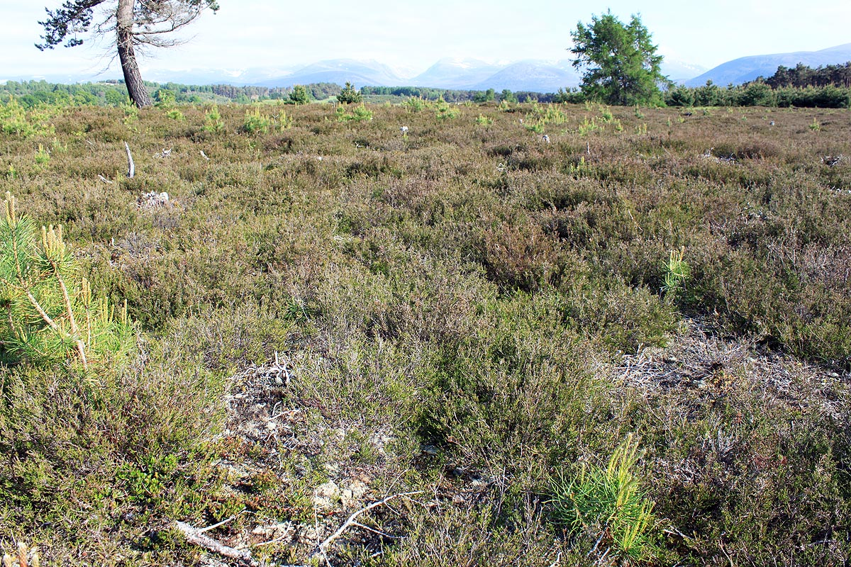 lowland heath at the an camas mr site 20100616 1330269574