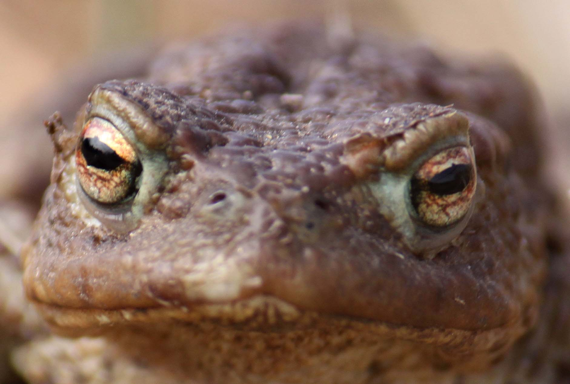toad 20110130 1554495225