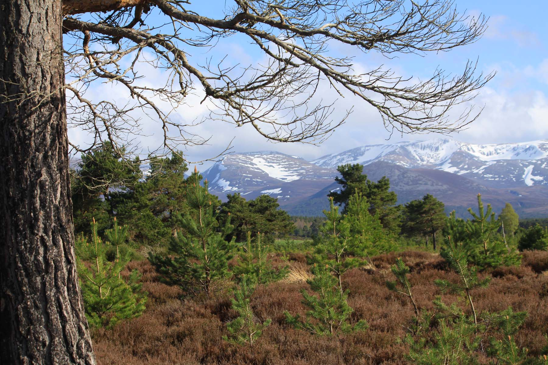 site of a proposed new town in the cairngorms National Park bscg