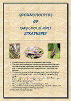 Groundhopper Leaflet