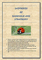 ladybirds-of-badenoch-and-strathspey